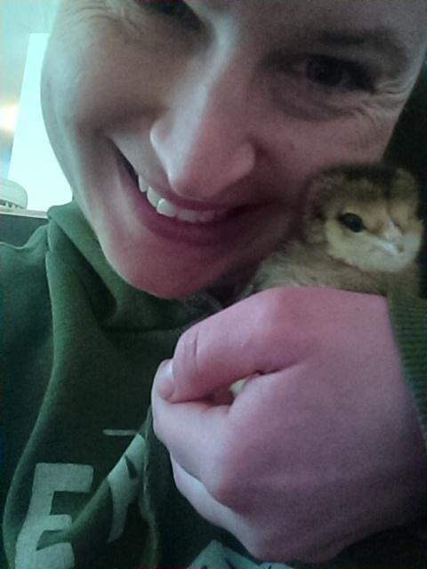 Cuddling baby chick
